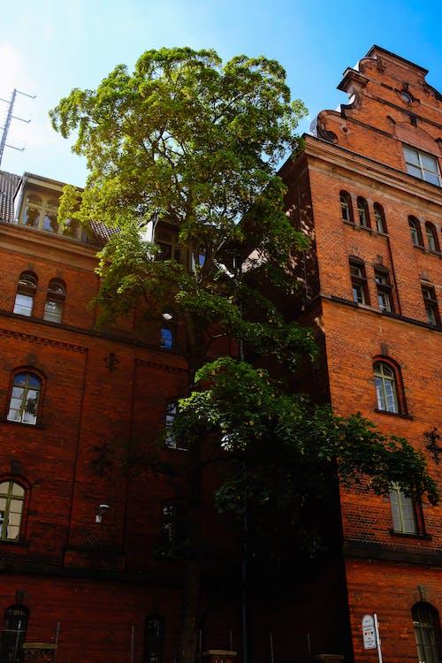 Ảnh lưu trữ miễn phí về các cửa sổ, kiến trúc, quan điểm, Tòa nhà
