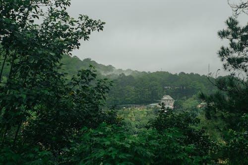 ağaç, dumanlı sis, ev, sis içeren Ücretsiz stok fotoğraf