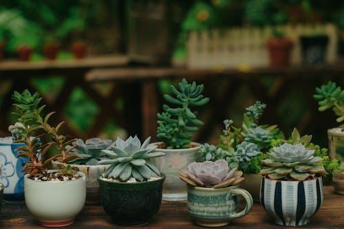 ağaç, ağaç bakla, taş lotus, yeşil içeren Ücretsiz stok fotoğraf