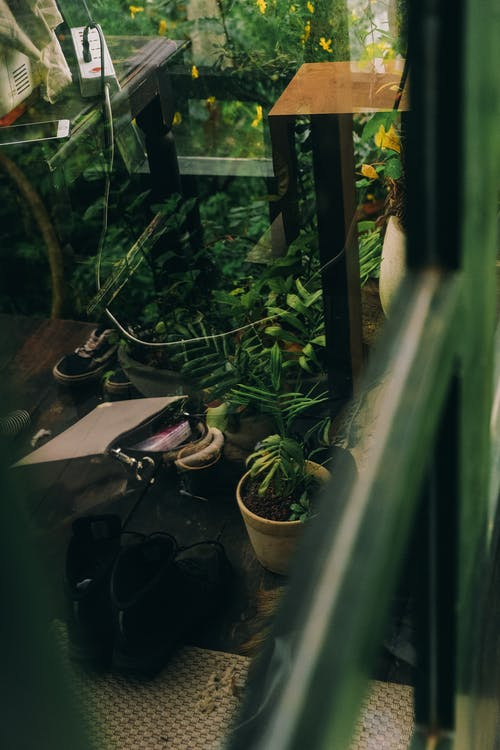 ayna, yansıtmak, yeşil içeren Ücretsiz stok fotoğraf