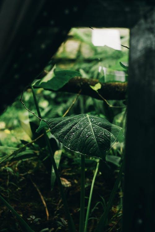 ayrılmak, çiy, yağmur, yeşil içeren Ücretsiz stok fotoğraf