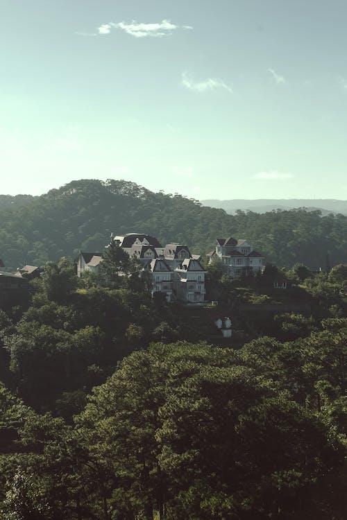 açık, Beyaz Saray, çam tepeleri, sabah içeren Ücretsiz stok fotoğraf