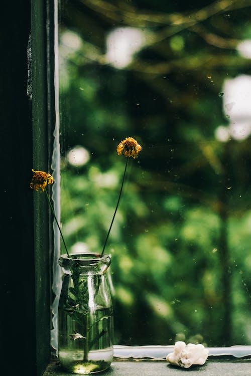 Gratis stockfoto met bloeien, bloeiend, bloemen, bloemen achtergrond