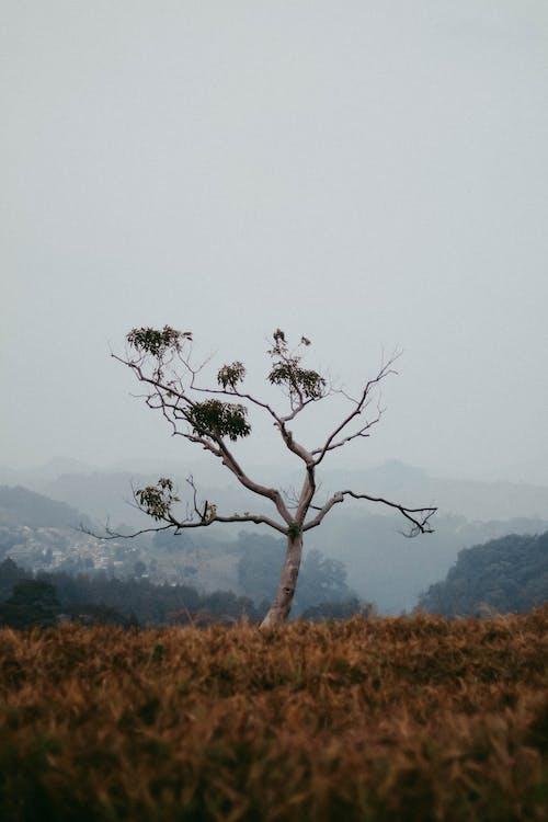 Δωρεάν στοκ φωτογραφιών με 4k ταπετσαρία, γρασίδι, γυμνό δέντρο, δέντρο