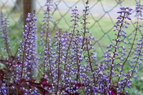 คลังภาพถ่ายฟรี ของ ความงามในธรรมชาติ, ดอกไม้, ดอกไม้สวย, น่ารัก
