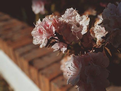 增長, 戶外, 明亮, 植物群 的 免費圖庫相片