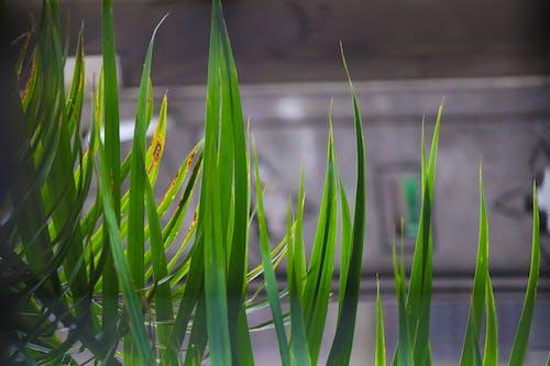 Gratis lagerfoto af 4k-baggrund, græs, grøn, grønt græs