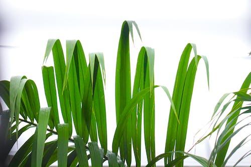 Gratis lagerfoto af græs, grøn, grønt græs, hvid baggrund