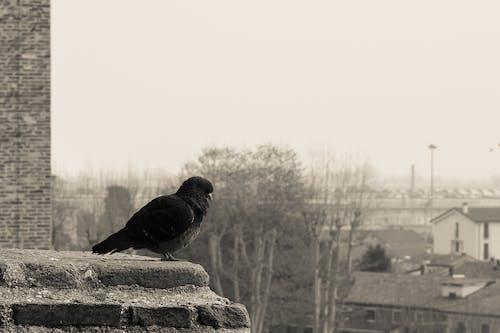 Ảnh lưu trữ miễn phí về b & w, chim, phong cảnh