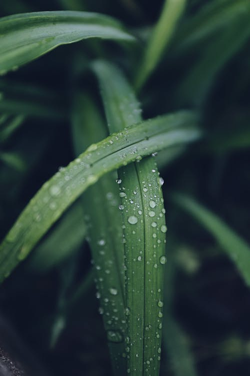 Water Drops on Green Leafed Plant
