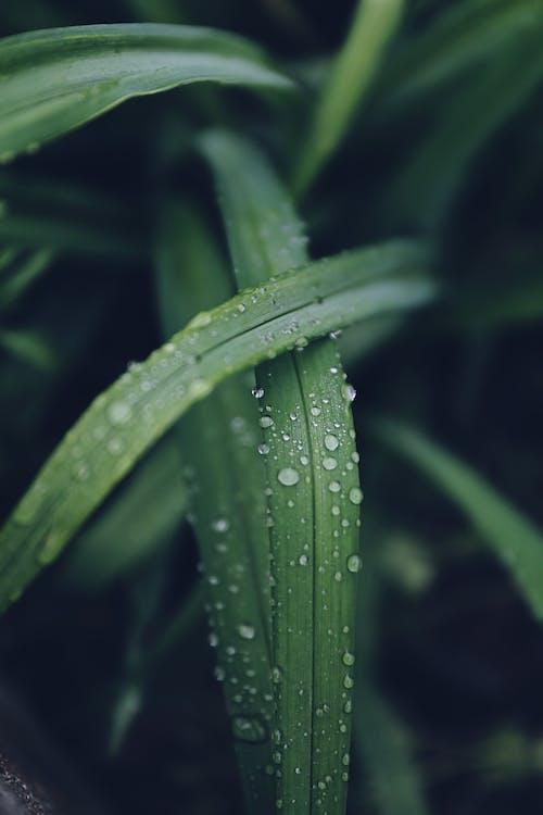 H2O, 增長, 天性, 微距攝影 的 免费素材照片