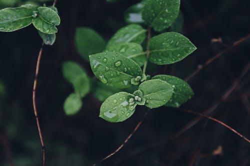 Gratis stockfoto met bladeren, bloeien, bloeiend, buiten