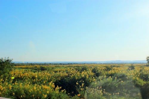 길에서, 노란색, 녹색, 도로의 무료 스톡 사진