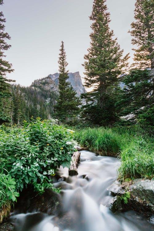 Бесплатное стоковое фото с вода, воды, горы, дикий