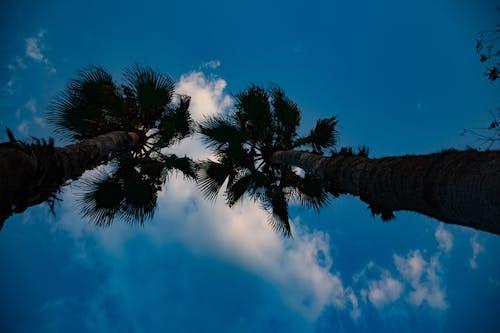 Fotos de stock gratuitas de celestial, cielo, palmera, palmeras