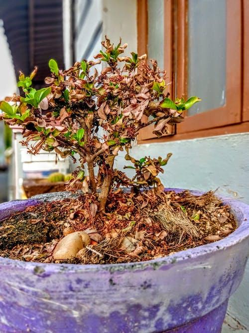 Kostenloses Stock Foto zu blühende pflanze, grüne und trockene pflanze, mutter natur, schrubben