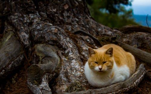 Gratis lagerfoto af kat