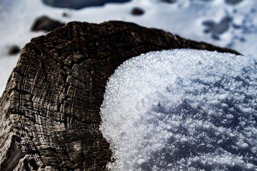 Gratis lagerfoto af sne, træstub