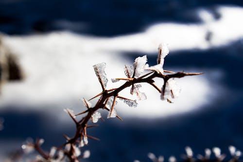 Kostenloses Stock Foto zu dornen, eis, kristalle, schnee