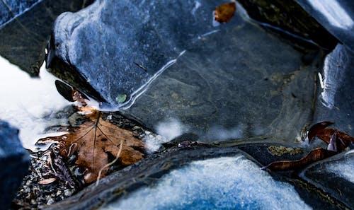 Gratis lagerfoto af ahornblade, brune blade, dam, sten