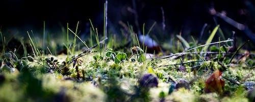 Kostenloses Stock Foto zu grasnahaufnahme, moos, winter moos