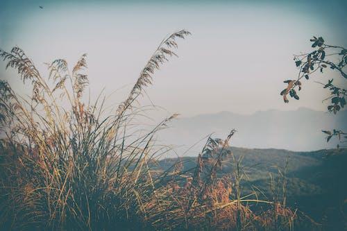Foto profissional grátis de beleza na natureza, colina, vista bonita