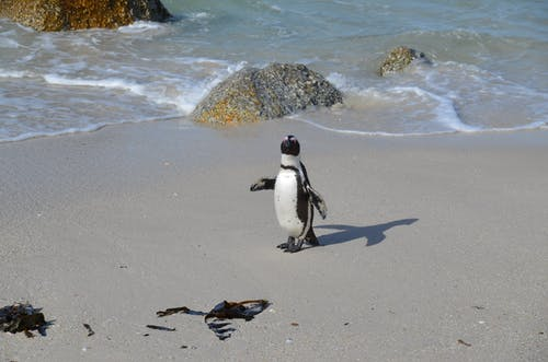 Funny adorable penguin on sandy coast
