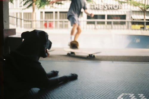 Free stock photo of 35mm, dog, film photography