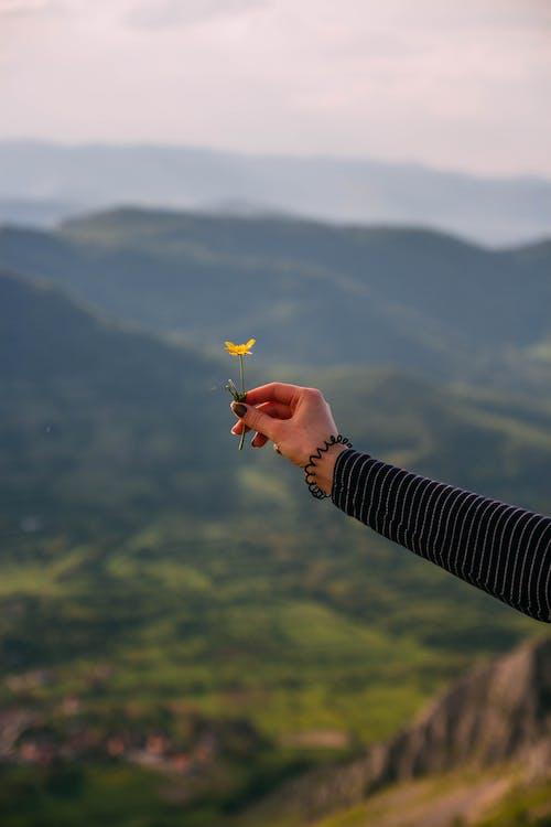 berg, bloem, buiten