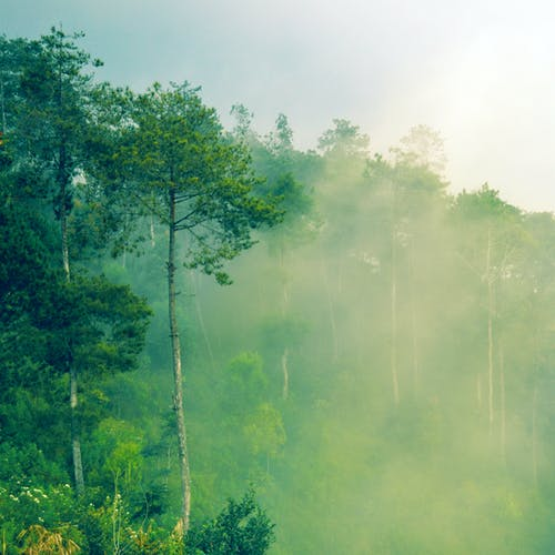 Free stock photo of fog, forest, hazy