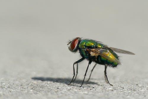 Бесплатное стоковое фото с желтый, жук, зеленый, красный