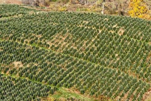 คลังภาพถ่ายฟรี ของ agbiopix, การเกษตร, ภูเขา