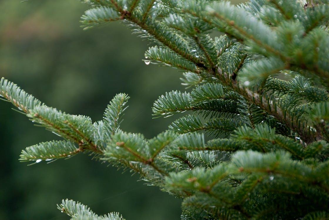 agbiopix, hegyek, karácsonyfák
