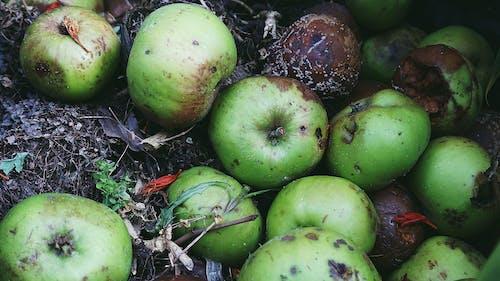 Photos gratuites de automne, compost, déchue, déclin