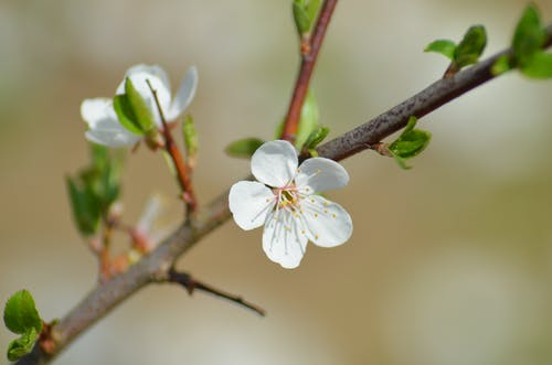 Darmowe zdjęcie z galerii z kwitnąć