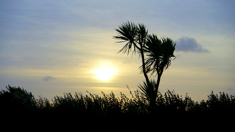 dusk, landscape, nature