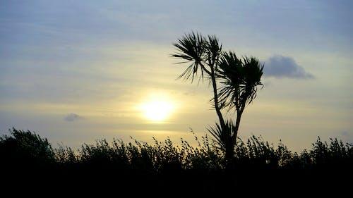 ağaç, doğa, gökyüzü, Güneş içeren Ücretsiz stok fotoğraf