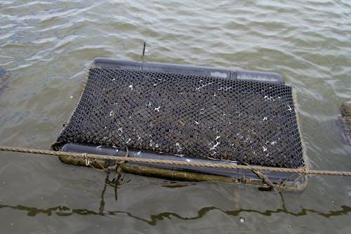 คลังภาพถ่ายฟรี ของ agbiopix, น้ำ, หอยนางรม, อาหารทะเล