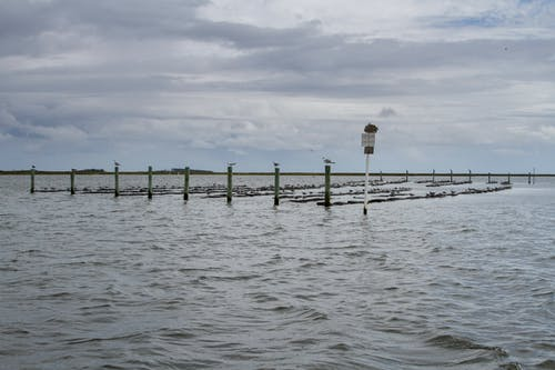 คลังภาพถ่ายฟรี ของ agbiopix, ลอย, อาหารทะเล, เตียงหอยนางรม