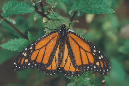 Orange, Black and White Butterfly on Green Leaf Plant
