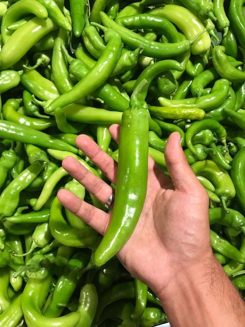 Foto profissional grátis de chili, ecológico, fresco, mercado do fazendeiro