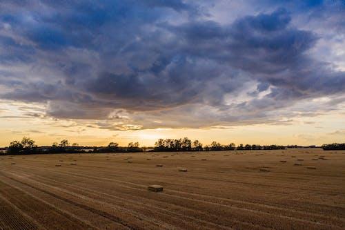 Gratis lagerfoto af afgrøde, agro, antenne, bane