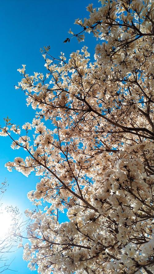 Fotobanka sbezplatnými fotkami na tému azúrová, biele kvety, fotka, fotografia prírody