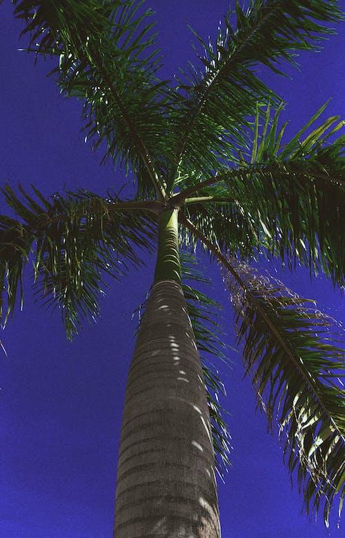 Fotobanka sbezplatnými fotkami na tému krása v prírode, letné vibrácie, leto, matka príroda