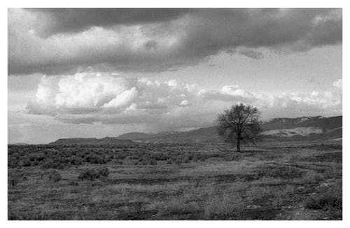 Gray-scale Photography  of Tree Across The Desert