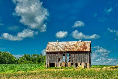 Бесплатное стоковое фото с за городом, заброшенный, пахотная земля, поле