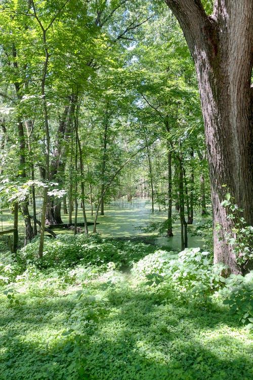Základová fotografie zdarma na téma bujný, dřevo, flóra, krajina