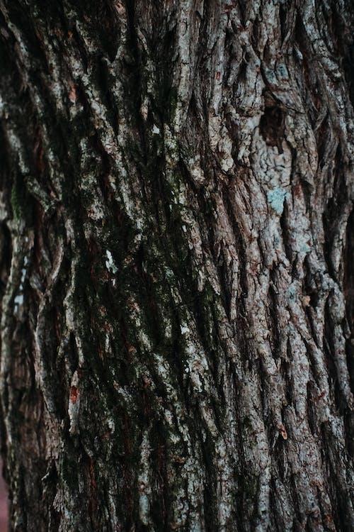 Photos gratuites de aboiement, arbre, brun, écorce