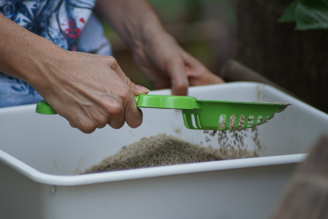Person Cleaning A Cat Litter Box