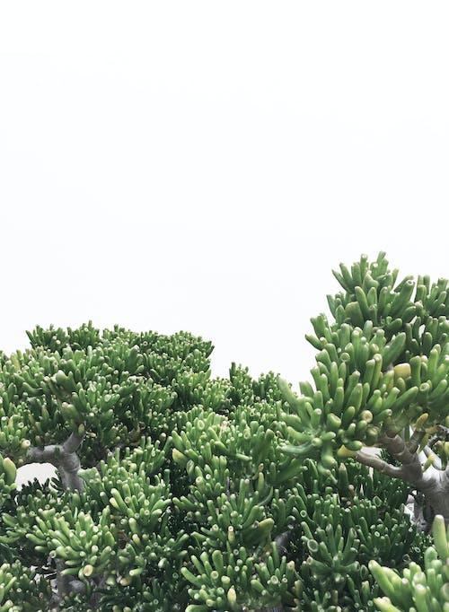 Fotos de stock gratuitas de botánico, color, jardín, planta crasa